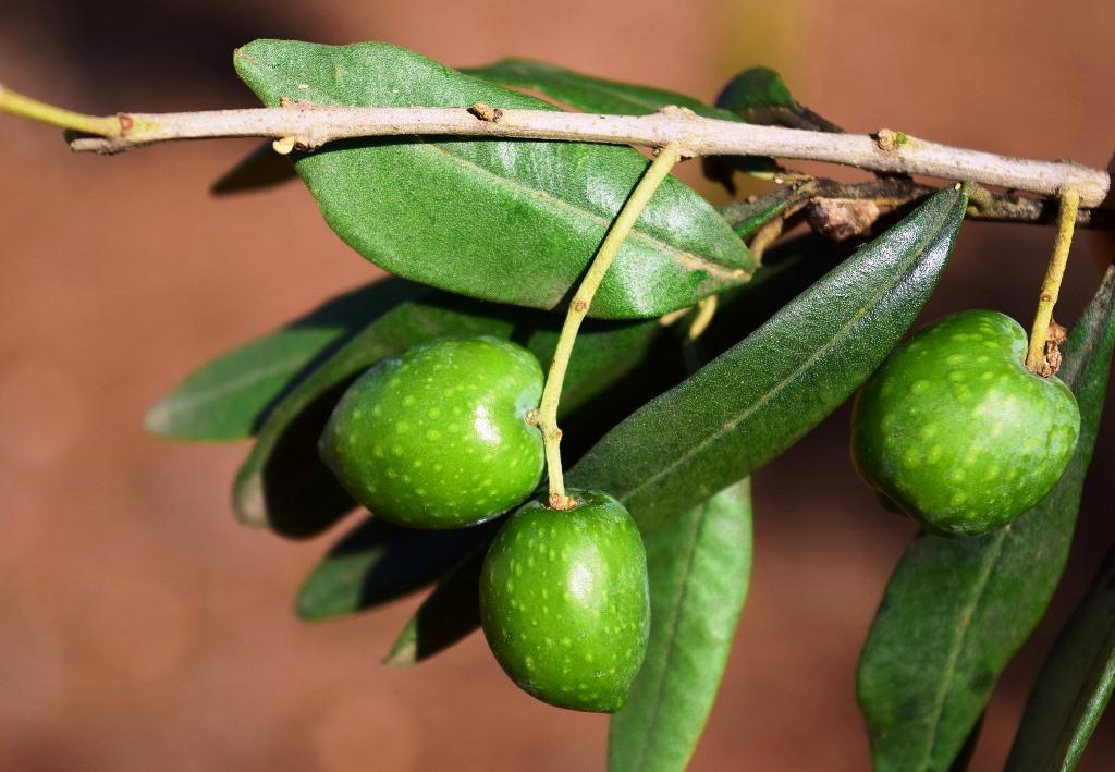 Marginalie 78: Der Andalusische Feinschmecker